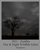 2021-07-14-ZambiaSafari