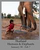 2020-01-30-ElephantsThailand