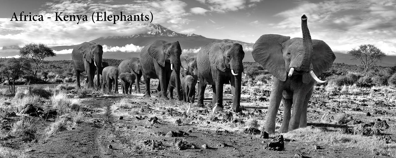 Africa - Kenya (Elephants)