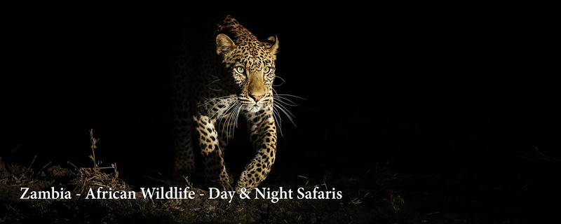 "<a href=""http://www.incredibletravelphotos.com/2018-Workshops/2018-Travel-Workshops/10-14-18ZambiaSafari/"">Click here to learn more...</a>"