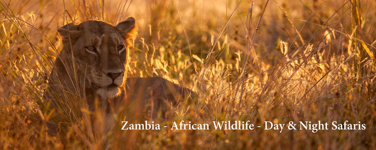 """<a href=""""http://www.incredibletravelphotos.com/2018-Workshops/2018-Travel-Workshops/10-14-18ZambiaSafari/"""">Click here to learn more...</a>"""