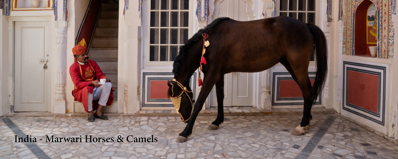 """<a href=""""http://www.incredibletravelphotos.com/2018-Workshops/2018-Travel-Workshops/11-09-18MarwariHorsesCamels/"""">Click here to learn more...</a>"""