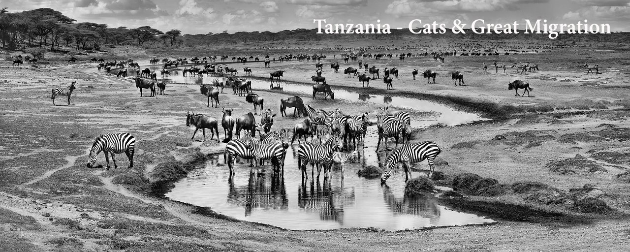 Tanzania - Cats & Great Migration
