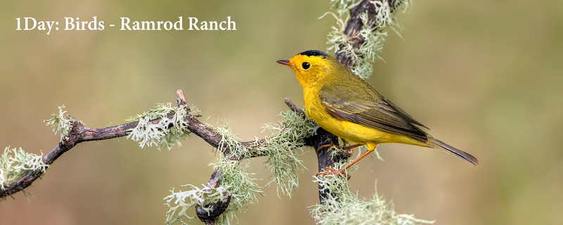 Birds - Ramrod Ranch