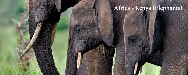Africa - Kenya (Elephants)