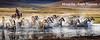 Mongolia - Eagle Hunters