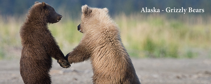 Alaska - Grizzly Bears