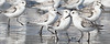 Birds--001
