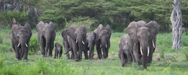 Africa-Kenya--003