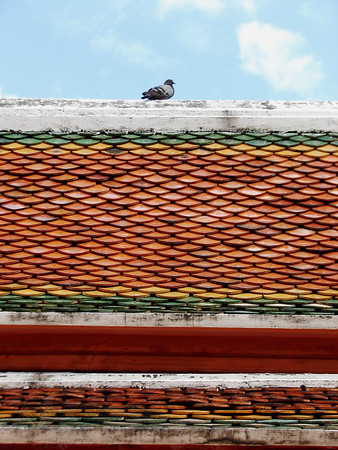 Pigeon on The Roof - Thailand