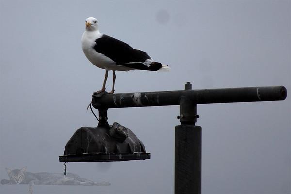 Egilsay Pier - Gull on a Lamp Post