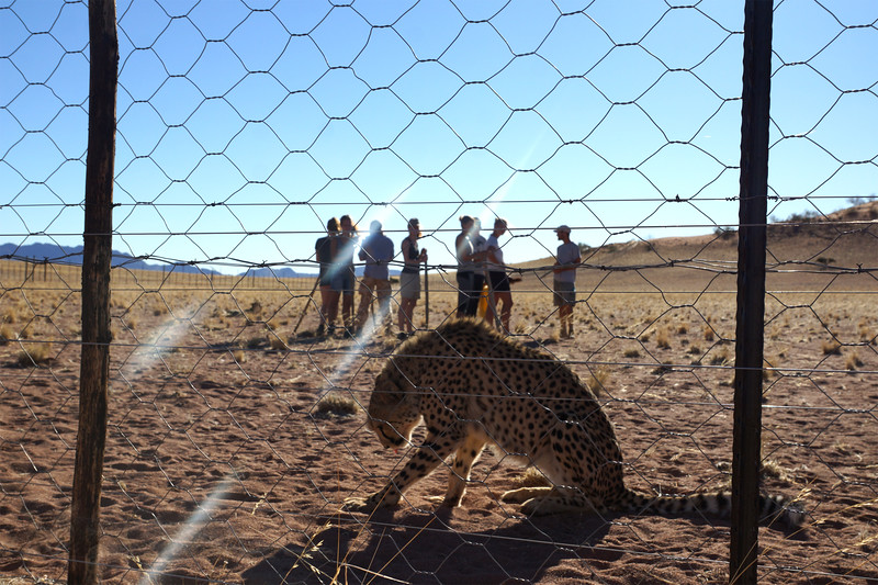 In With The Cheetahs