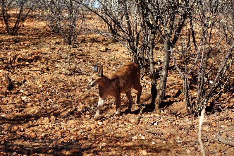 Naankuse - Caracal - Namibia