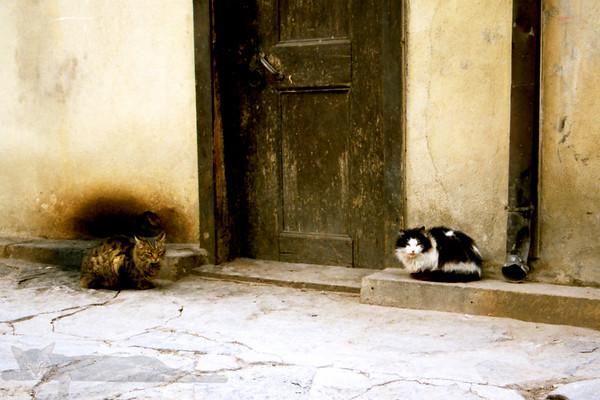 Bursa Cats