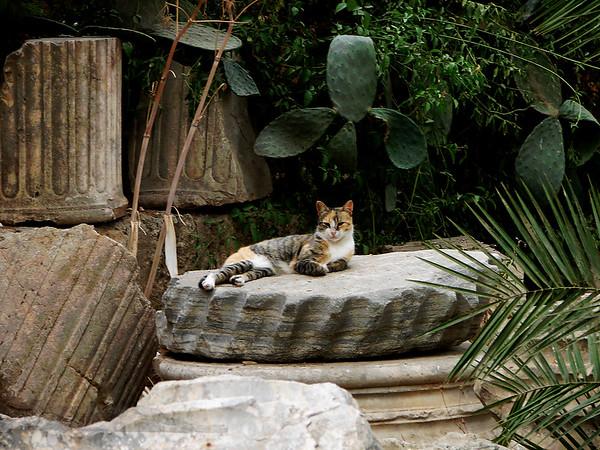Handsome Feline in Tunisia