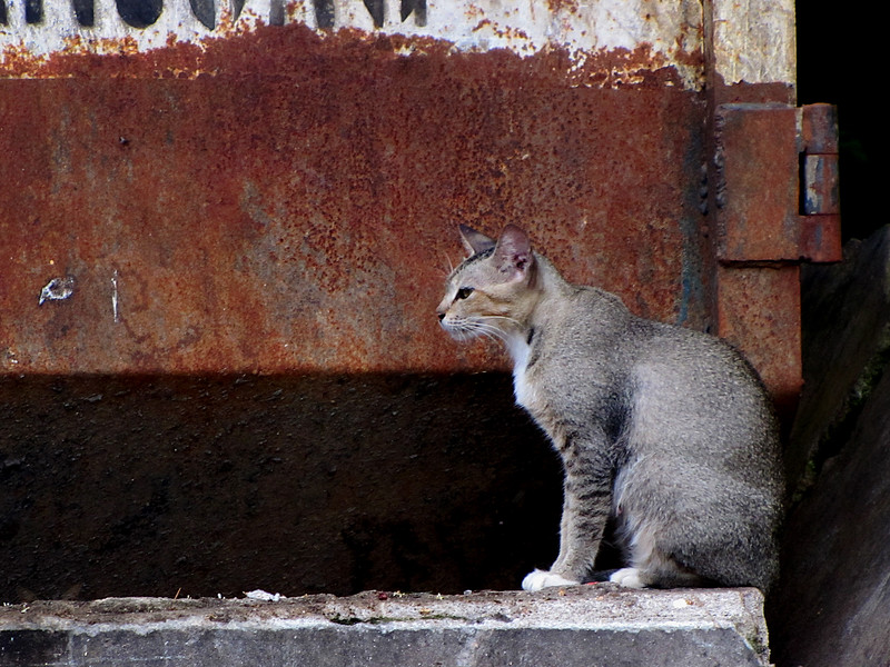 Stray Moggie in Malaysia
