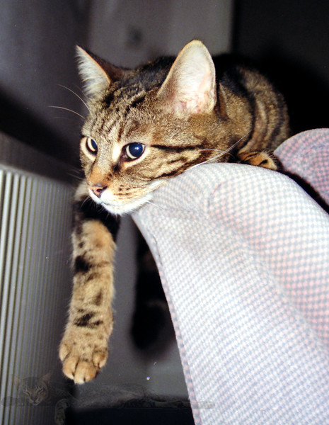 Cat Kato Chilling