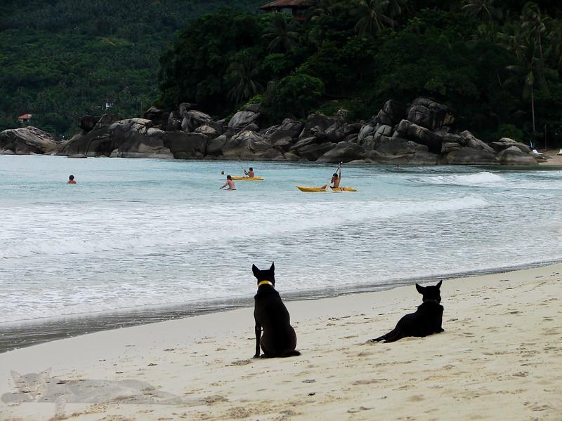 Dogs on the a Beach - Ko Phan Gan, Thailand