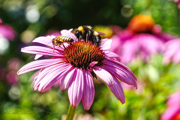Bees and Flowers in Surrey