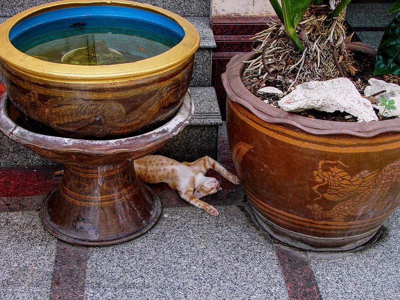 Wat Traimit Bangkok - Sleeping Cat