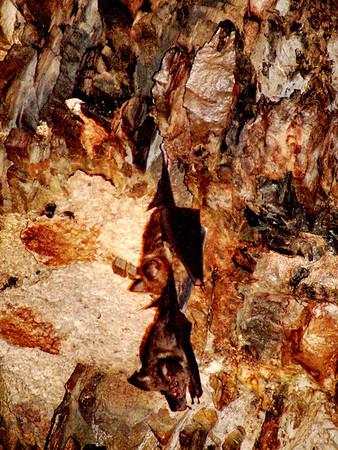 Bat Cave in Thailand