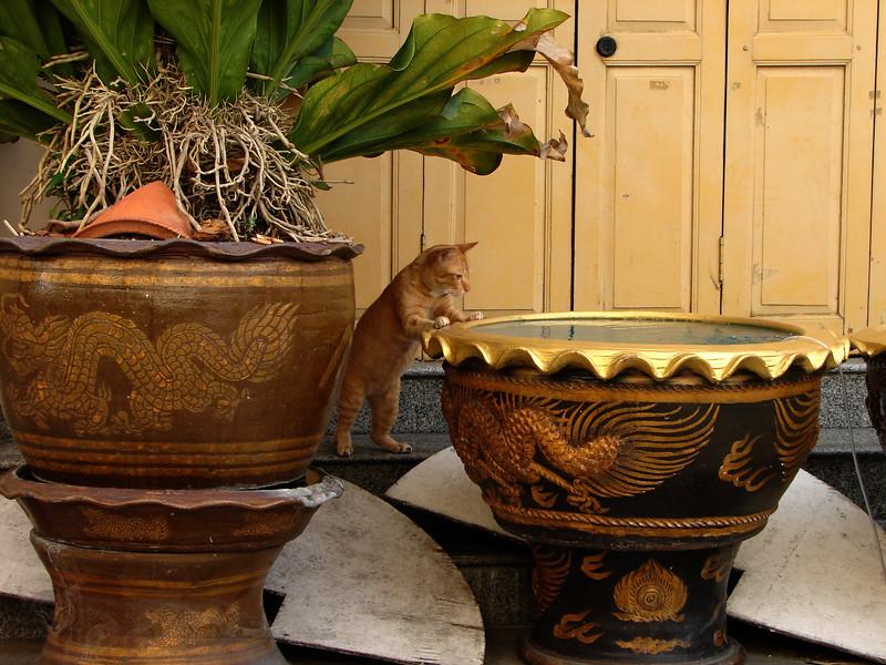 Wat Traimit Bangkok - Fishing Cat