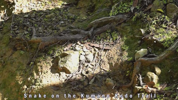 Snake on the Kumano Kodo Trail