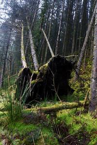 A Slow Falling Tree