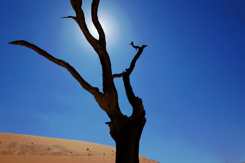 Deadvlei - Dead or Petrified Tree