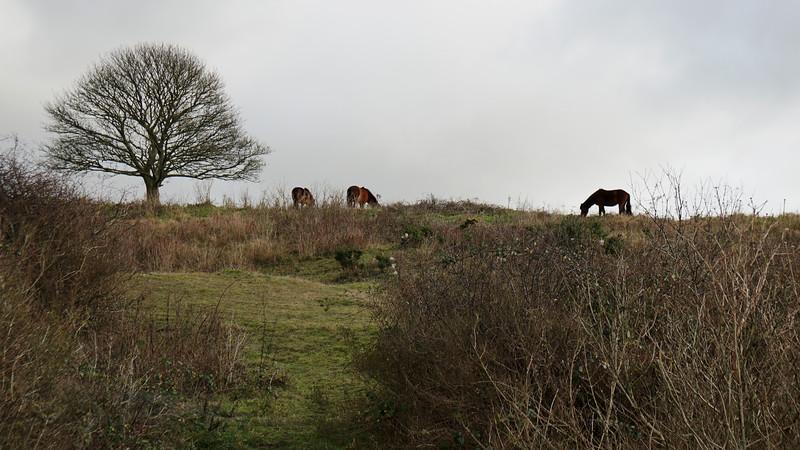 Cissbury Ring, West Sussex