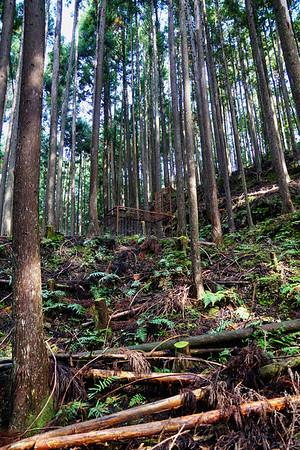 Bear Trap on the Kumano Kodo Trail