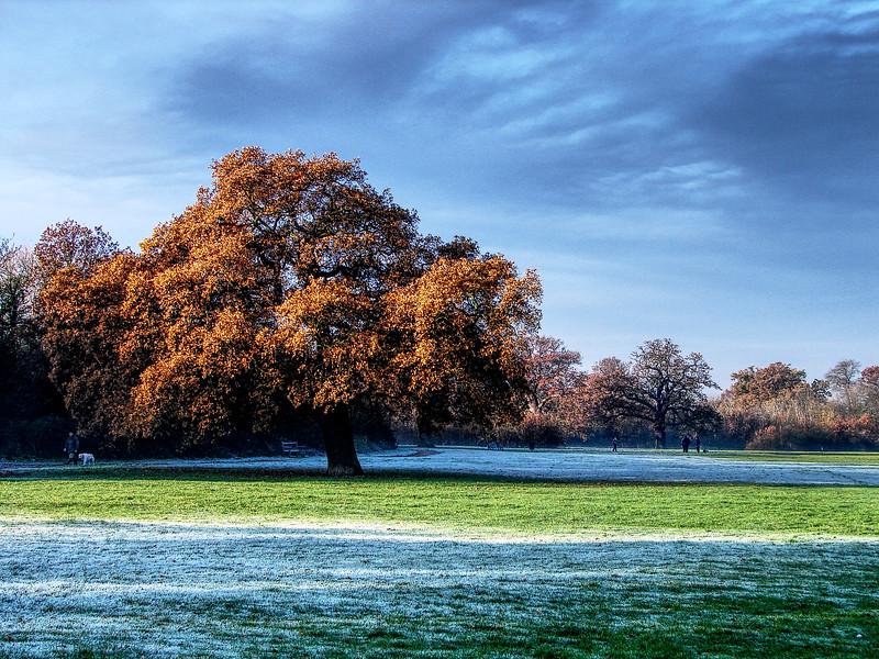The BIG Oak Tree on Cannon Hill Common 2005