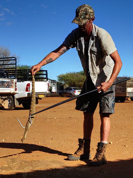 Naankuse - Puff Adder - Namibia