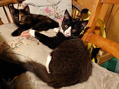 Trumland Farm - Rousay - Kittens