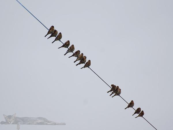 Egilsay - Birds on a Wire