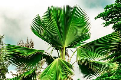 Close up fan palm at Premier Hotel Ibadan Nigeria