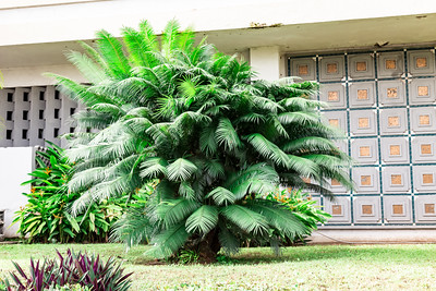 Decorative palm Premier Hotel Ibadan Nigeria