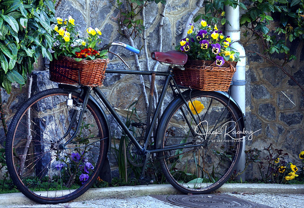 """Pyrenees Bicycle"""