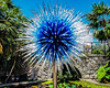 Sapphire Star - Chihuly