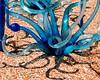 Blue Fiori - Chihuly