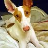 Dog: Nixon<br /> By: Samantha Isherwood