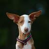 Dogs name: Odin<br /> By Karolina Nowak