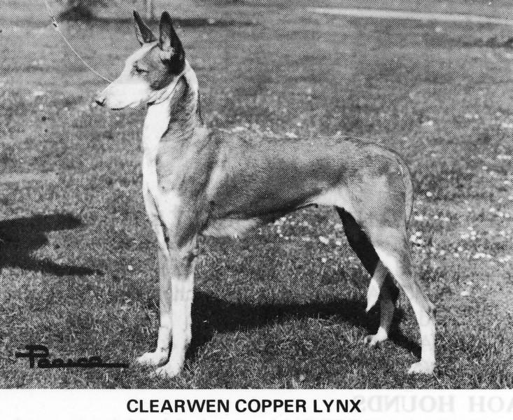 "CH Claerwen Copper Lynx <br /> DOB: 4/20/1974<br /> Pedigree: <a href=""http://www.pawpeds.com/db/?a=p&id=870925&g=4&p=ibi&date=iso&o=ajgrep"">http://www.pawpeds.com/db/?a=p&id=870925&g=4&p=ibi&date=iso&o=ajgrep</a>"