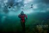 A stroll through an enchanted underwater forrest