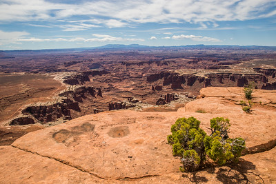 White Rim Overlook