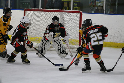 Sat-South-845-SuirtA-GoldenBears-JrDucks3IMG_2730