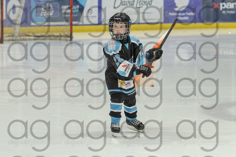 """Dundee Tigers defeat the Paisley Pirates 4-5 in sudden death overtime<br /> at Braehead Arena on 24 November , Picture: Al Goold ( <a href=""""http://www.algooldphoto.com"""">http://www.algooldphoto.com</a>)"""