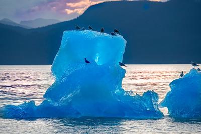 Gulls on Iceberg, Stephens Passage