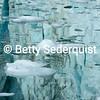 Iceberg Reflections, Marjerie Glacier, Glacier Bay