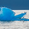 Gulls and Iceberg, Stephens Passage, Alaska